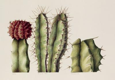 Cacti, 1999 by Annabel Barrett
