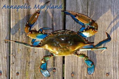 https://imgc.allpostersimages.com/img/posters/annapolis-maryland-blue-crab-on-dock_u-L-Q1GQP0N0.jpg?p=0