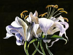 Classical Lilies by Anne Farrall Doyle