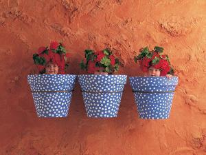 Mediterranean Pots by Anne Geddes