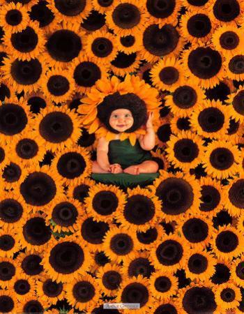 Sunflower Wall by Anne Geddes