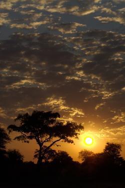 Sunset, Upper Vumbura Plains, Botswana by Anne Keiser