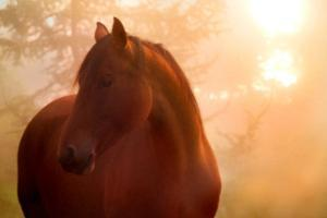 Bay Horse in Fog at Sunrise by Anne Louise MacDonald