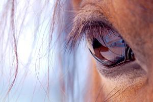 Macro of Horse Eye by Anne Louise MacDonald