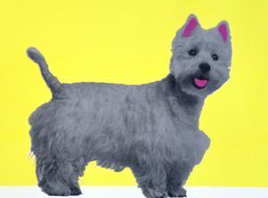 Bestie Westie by Anne Storno