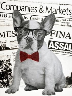 Wall street dog by Anne Storno
