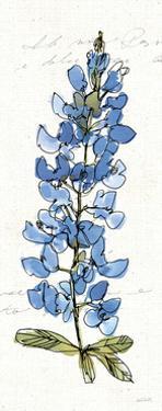 Texas Bluebonnet III by Anne Tavoletti