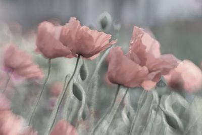 Softly by Anne Worner