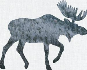 Moose by Annie Bailey