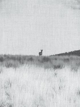Prairie Shadows by Annie Bailey