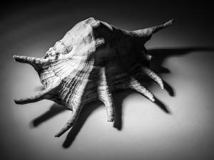 Shell Number 2 by Annie Bailey
