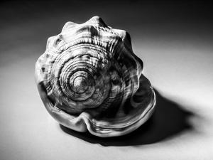Shell Number 3 by Annie Bailey