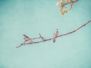 The Pair by Annie Bailey