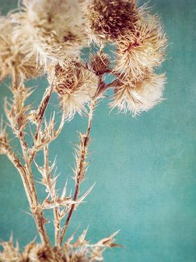 Thistles by Annie Bailey