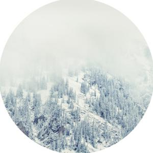 White Forest by Annie Bailey