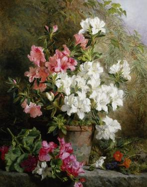 Still Life of Azaleas by Annie Feray Mutrie