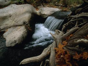 Autumn Scene of a Forest Creek Rushing over Rocks by Annie Griffiths Belt