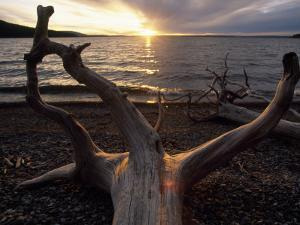 Driftwood Along the Shoreline of Yellowstone Lake by Annie Griffiths Belt