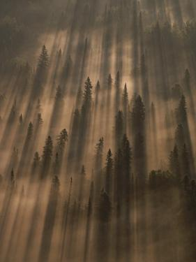 Early Morning Sunlight Burns Through a Fog over a Minnesota Forest by Annie Griffiths Belt