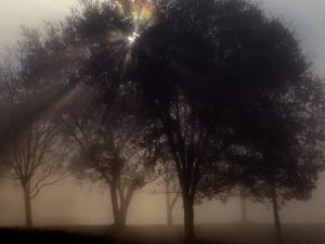 The Sun Peeks Through the Branches of a Tree Shrouded in Mist by Annie Griffiths Belt