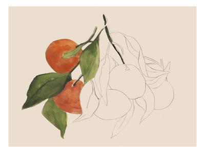 Tangerine Sketch II