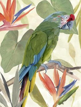 Tropical Parrot Composition I by Annie Warren