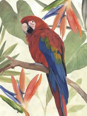 Tropical Parrot Composition II by Annie Warren