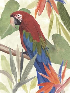 Tropical Parrot Composition III by Annie Warren