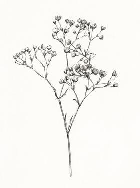 Wild Bloom Sketch I by Annie Warren