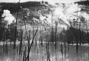 Barren trunks in water near steam rising from mountains, Roaring Mountain, Yellowstone National Par by Ansel Adams