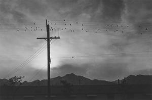 Birds on Wire, Evening by Ansel Adams