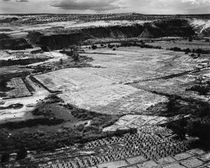 Corn Field, Indian Farm near Tuba City, Arizona, in Rain, 1941 by Ansel Adams