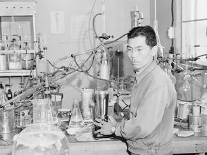 Frank Hirosama in laboratory at Manzanar, 1943 by Ansel Adams