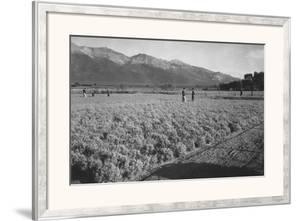 Guayule Field by Ansel Adams