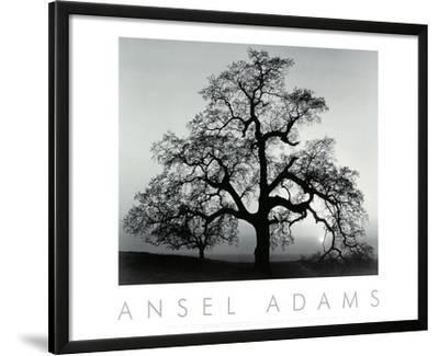 Oak Tree, Sunset City, California, 1932 by Ansel Adams