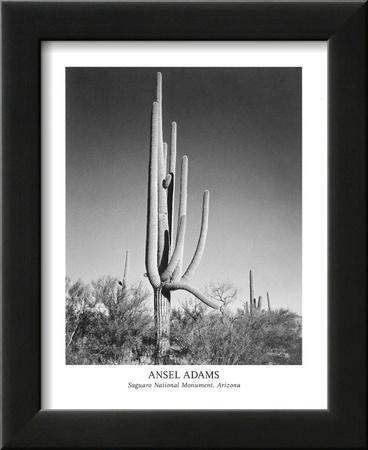 Saguaro National Monument Arizona by Ansel Adams