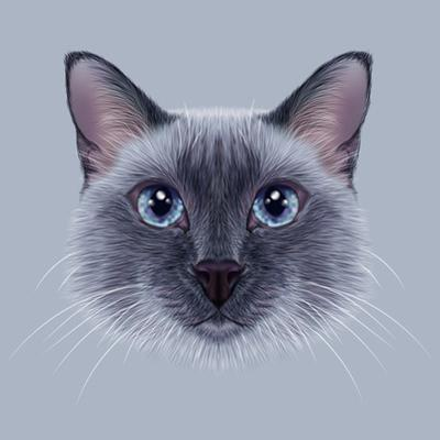 Illustrative Portrait of a Thai Cat. Cute Blue Point Traditional Siamese Cat. by ant_art19