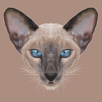 Illustrative Portrait of Siamese Kitten. Cute Domestic Blue Point Kitten with Blue Eyes. by ant_art19