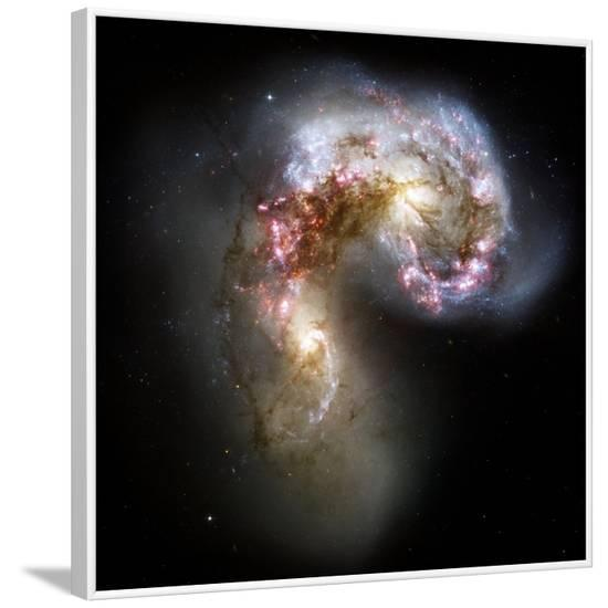 Antennae Galaxies, HST Image--Framed Photographic Print