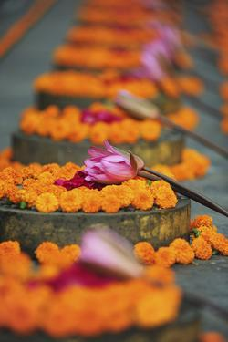 India, Bodh Gaya, Mahabodhi Complex, Great Awakening Temple, Flowers by Anthony Asael
