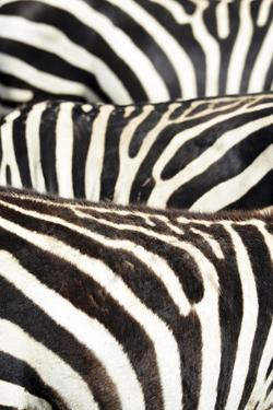 Kenya, Amboseli National Park, Close Up on Zebra Stripes by Anthony Asael