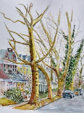 English Plane Trees,NYC, 2015 by Anthony Butera