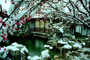 NY Chinese Scholar's Garden, Spring Snow, 2010 by Anthony Butera