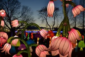 Winter Lantern Festival, Dancing Flowers, 2018 by Anthony Butera