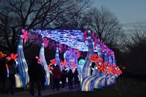 Winter Lantern Festival, Floral Passage, 2018 by Anthony Butera