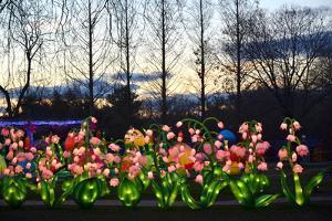 Winter Lantern Festival, Flowers, 2018 by Anthony Butera