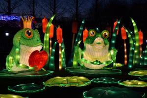 Winter Lantern Festival, Frog Love, 2018 by Anthony Butera