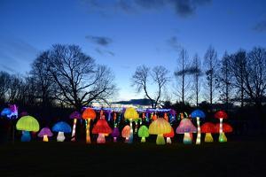 Winter Lantern Festival, Mushrooms, 2018 by Anthony Butera
