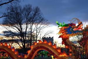 Winter Lantern Festivall, Dragon, 2018 by Anthony Butera