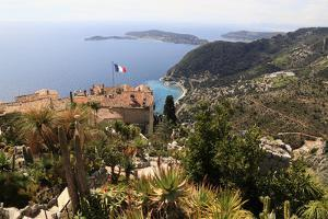Mixed Cacti at Botanical Gardens with Cap Ferrat in Background, Jardin Botanique Eze, Cote D'azur,  by Anthony Collins